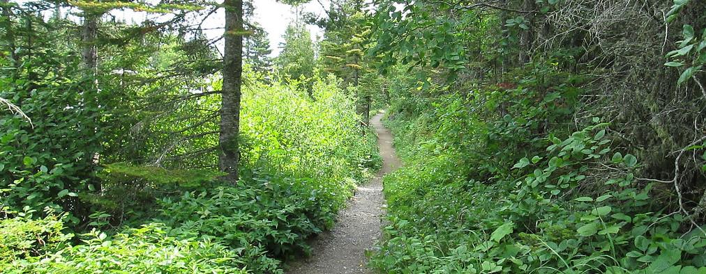 woods pic.jpg