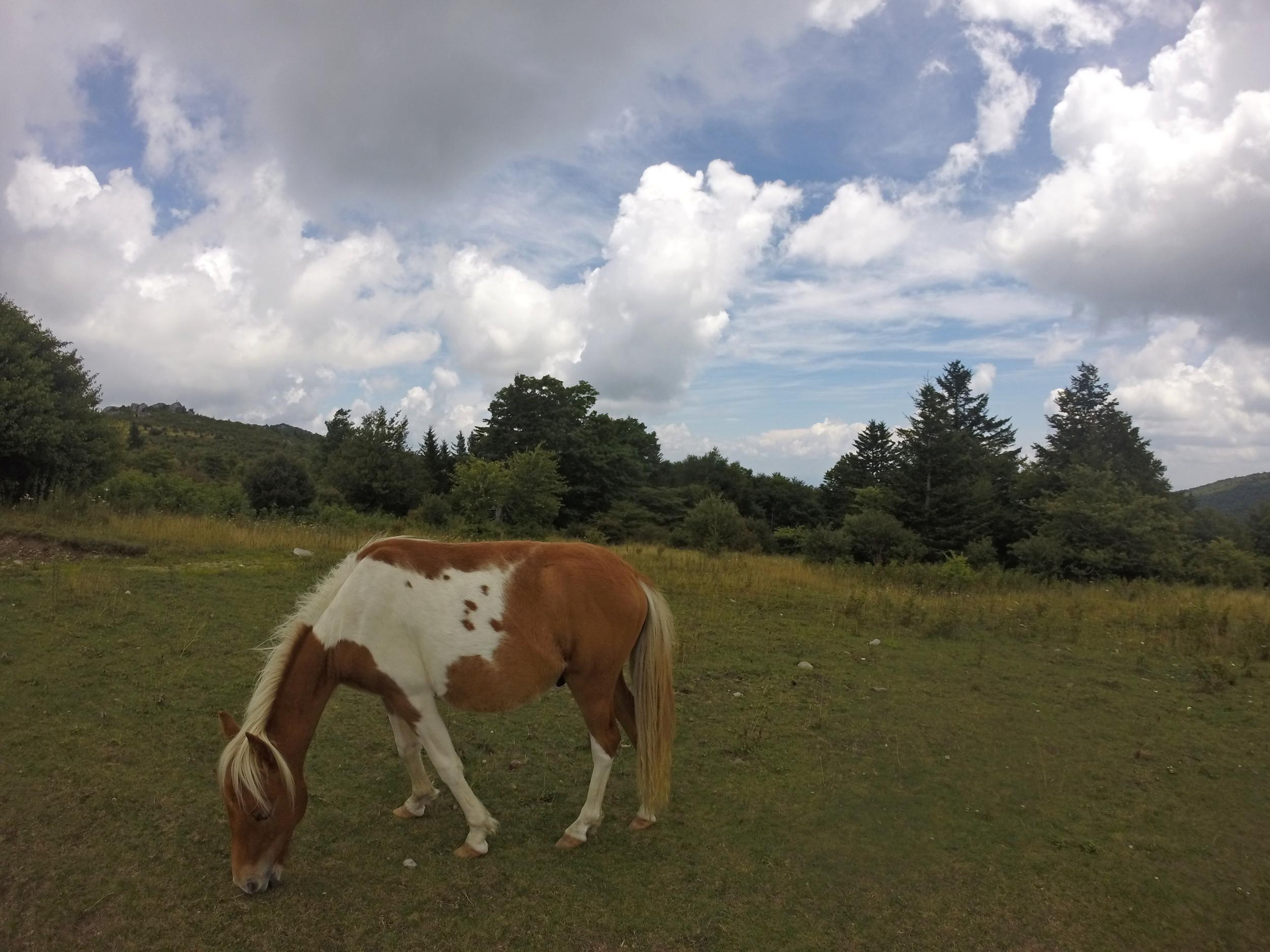 Ponylands