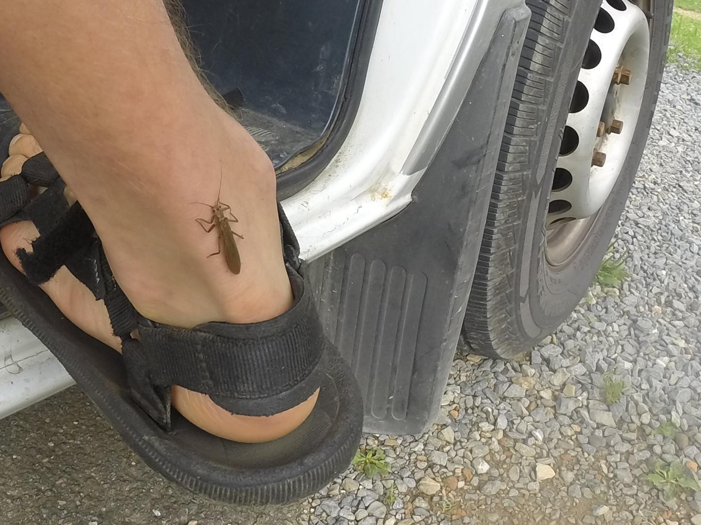 ... bugs climb me...