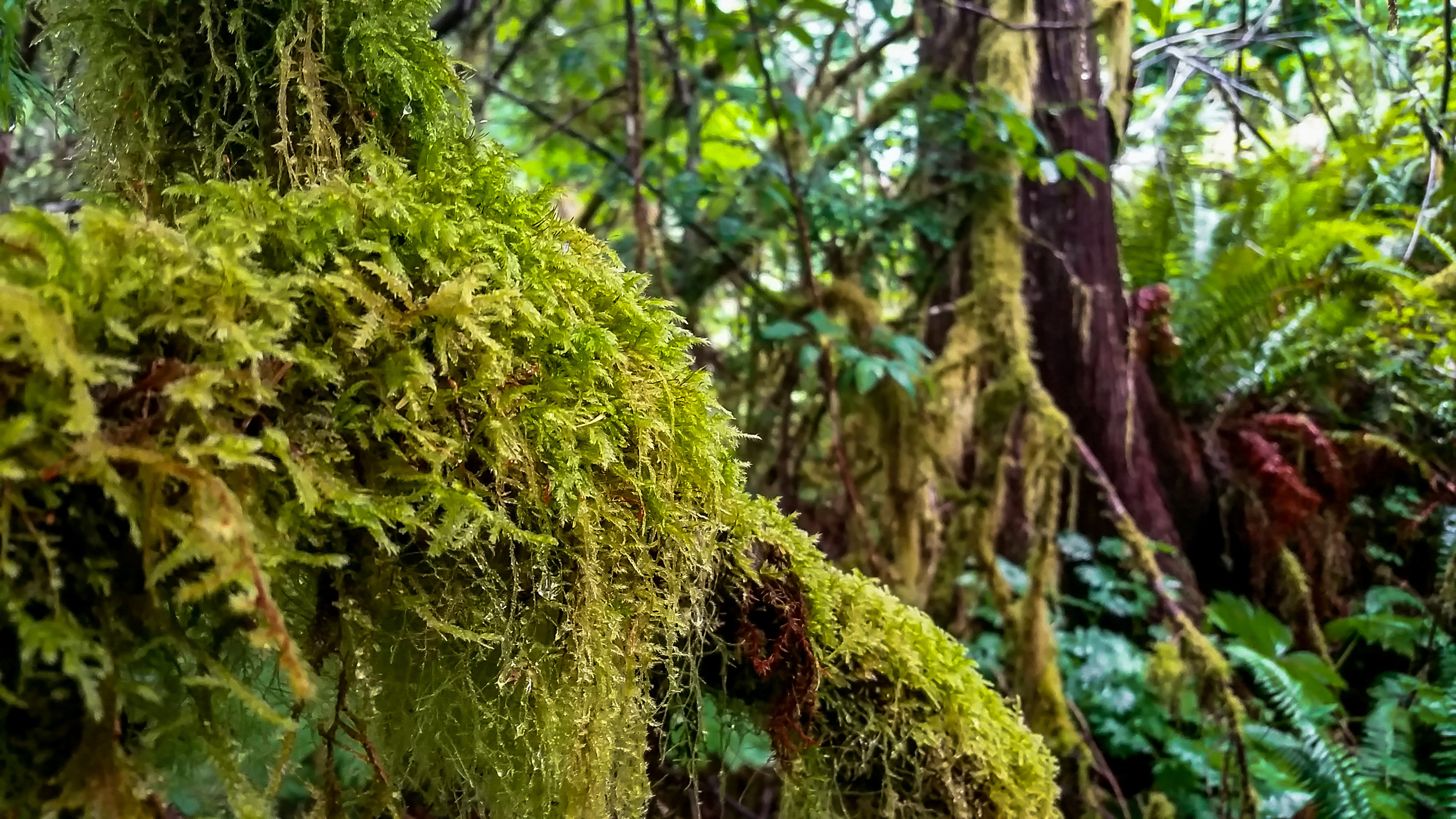 Our campsite. Olympic National Park has got some serious game when it comes to moss.