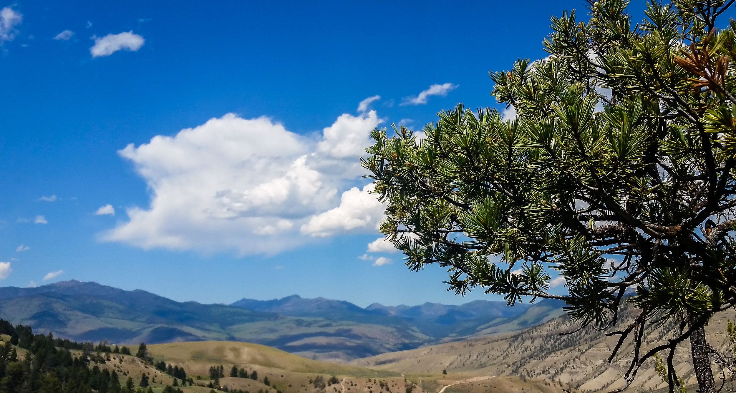 The view from Mammoth Hot Springs.
