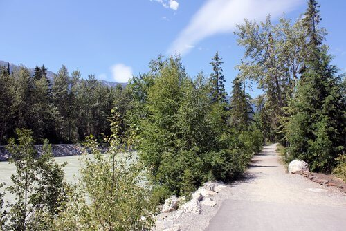 golden-bc-rotary-trail-river-path-kicking-horse