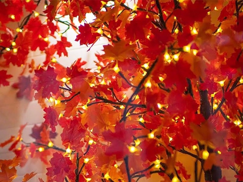 Red/Gold Maple Leaf