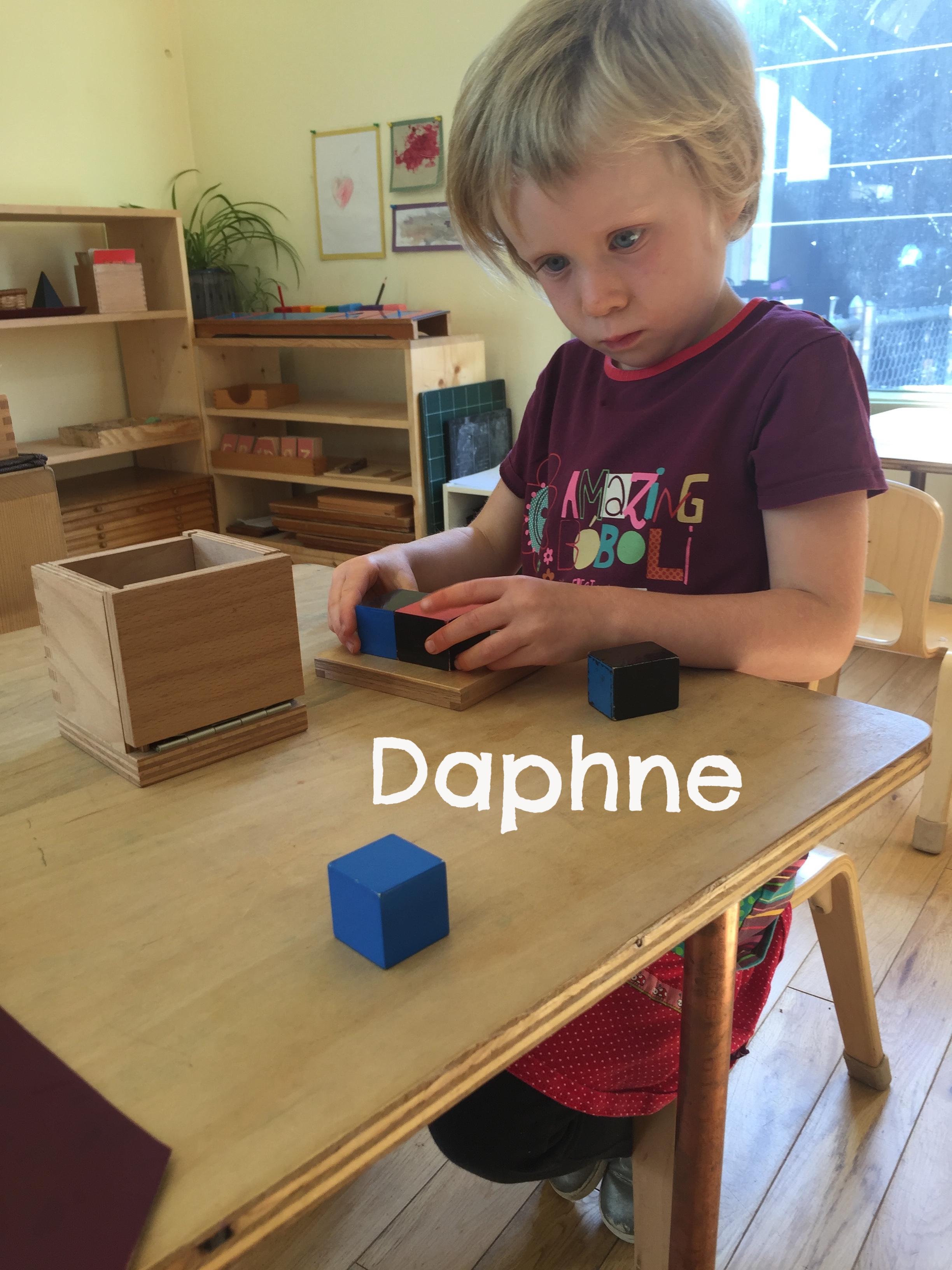 daphne binomial copy.jpeg