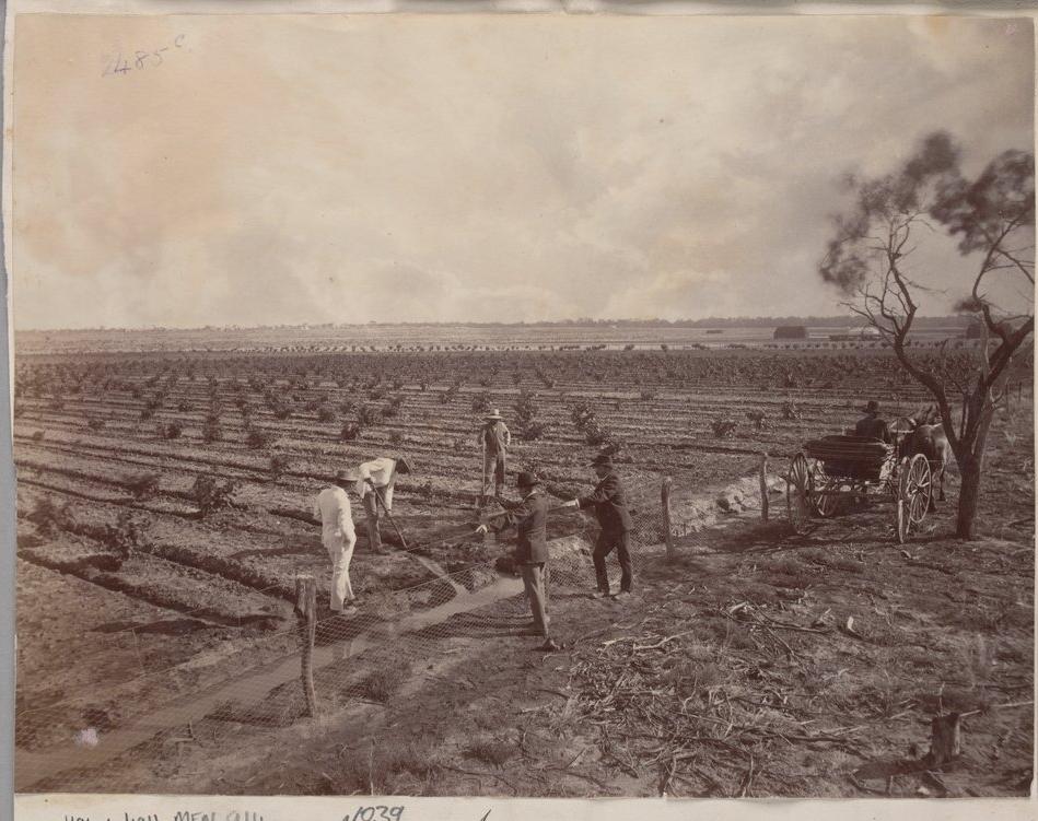 "J.W. Lindt, ""Irrigation at Mornington plantation"", Mildura, 1890.  H96.160/1915, State Library Victoria, Australia ."