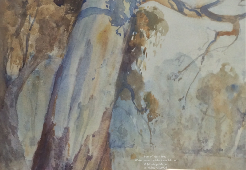 Part of 'Gum Tree'. Watercolour by Montagu Marks Copyright all rights reserved. Private Collection.