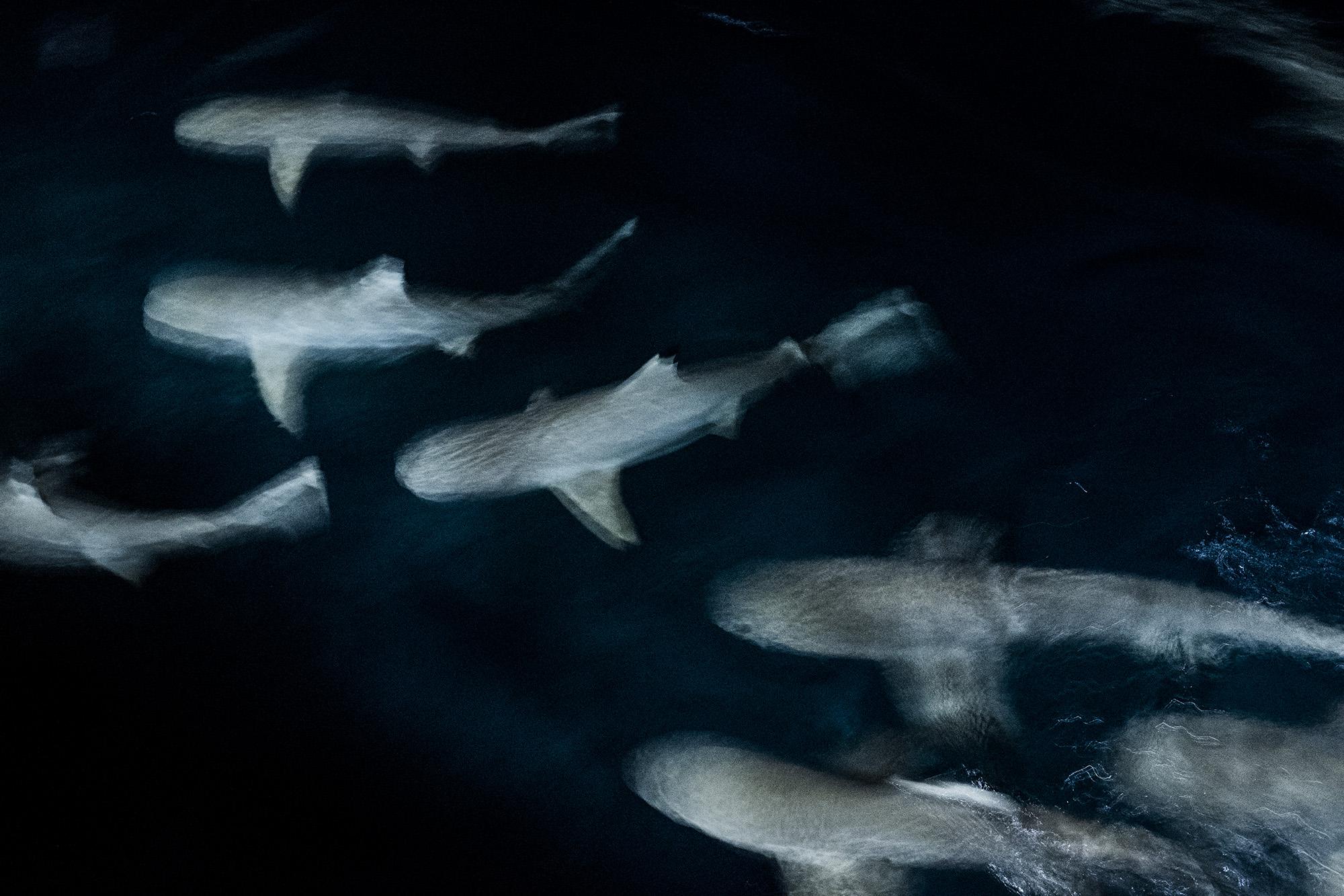 sharks_002.jpg