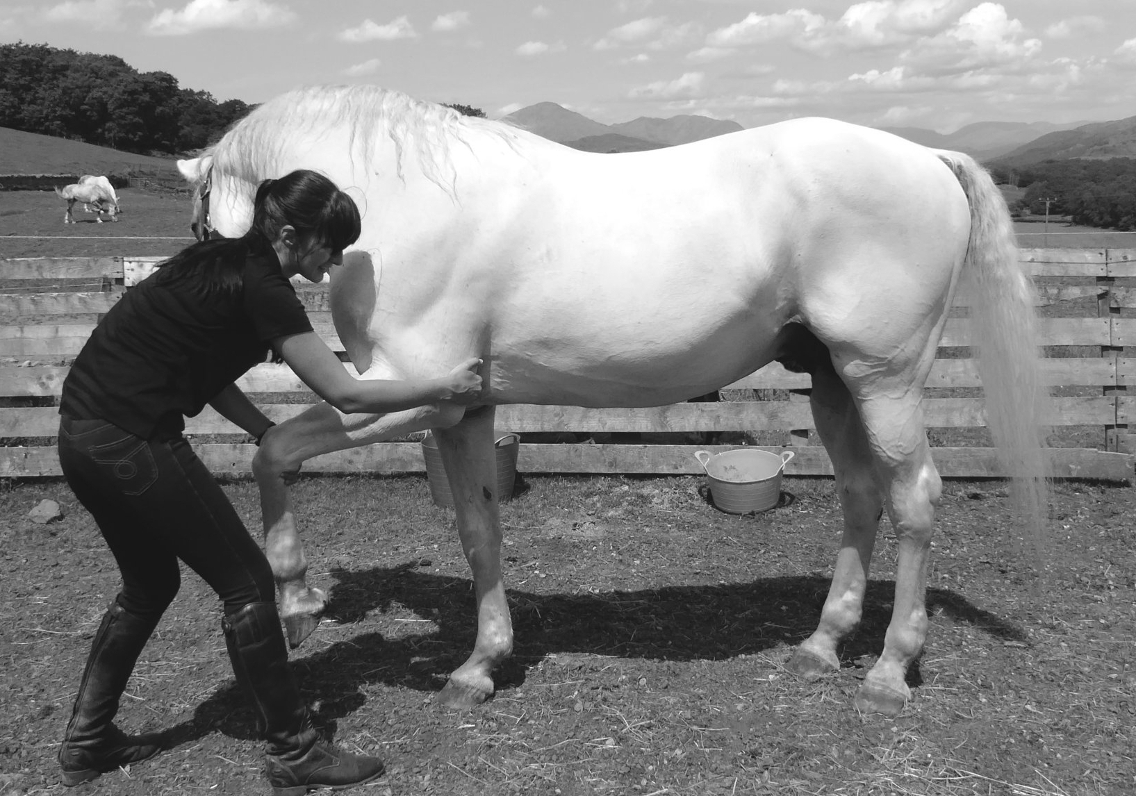 Equine Bowen Therapy Cumbria and Lancashire