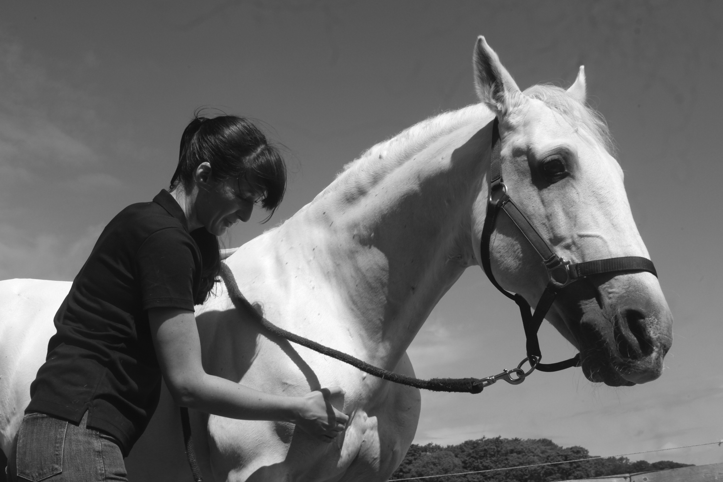 Equine Bowen Therapy Cumbria