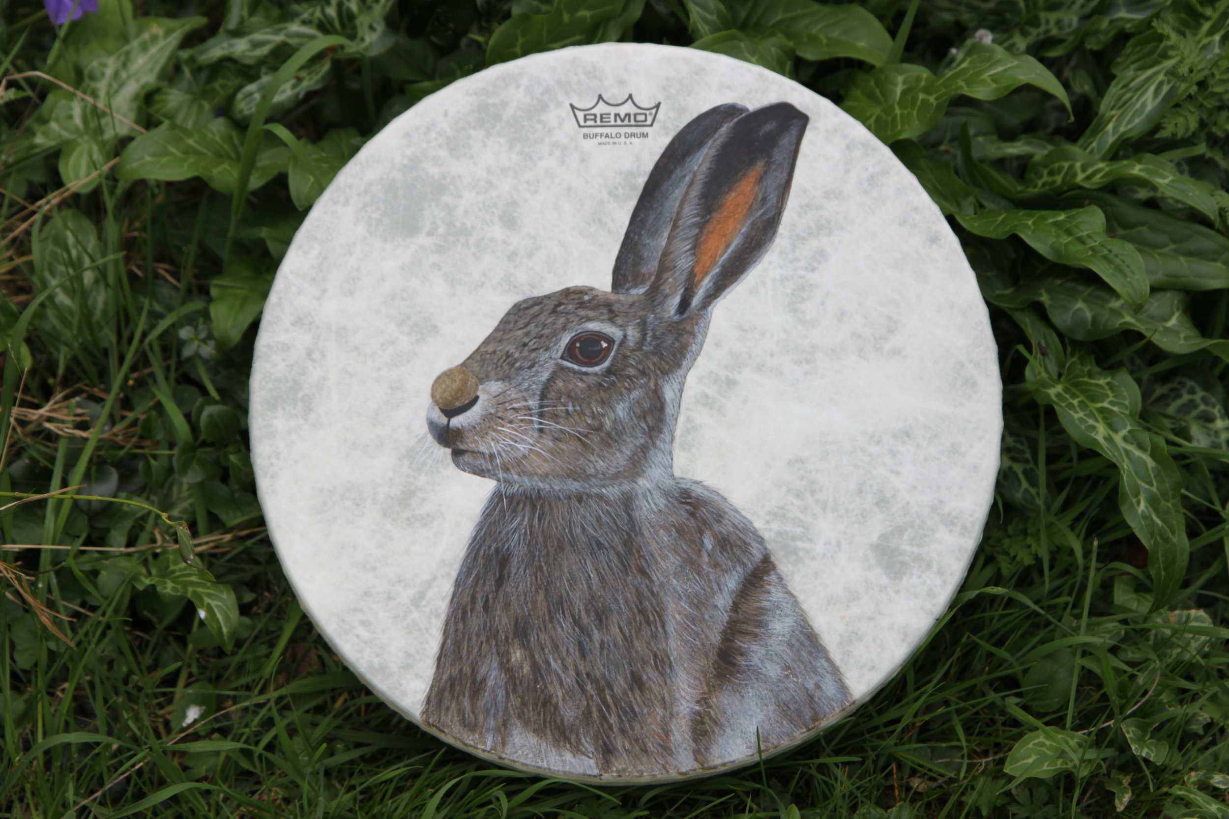 Hare Painted Shamanic Drum - Acrylic on Fibreskyn © Sharyn Turner 2017