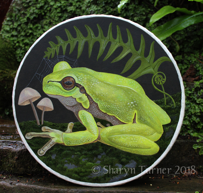 Frog Drum - Acrylic on Fibreskyn © Sharyn Turner 2018