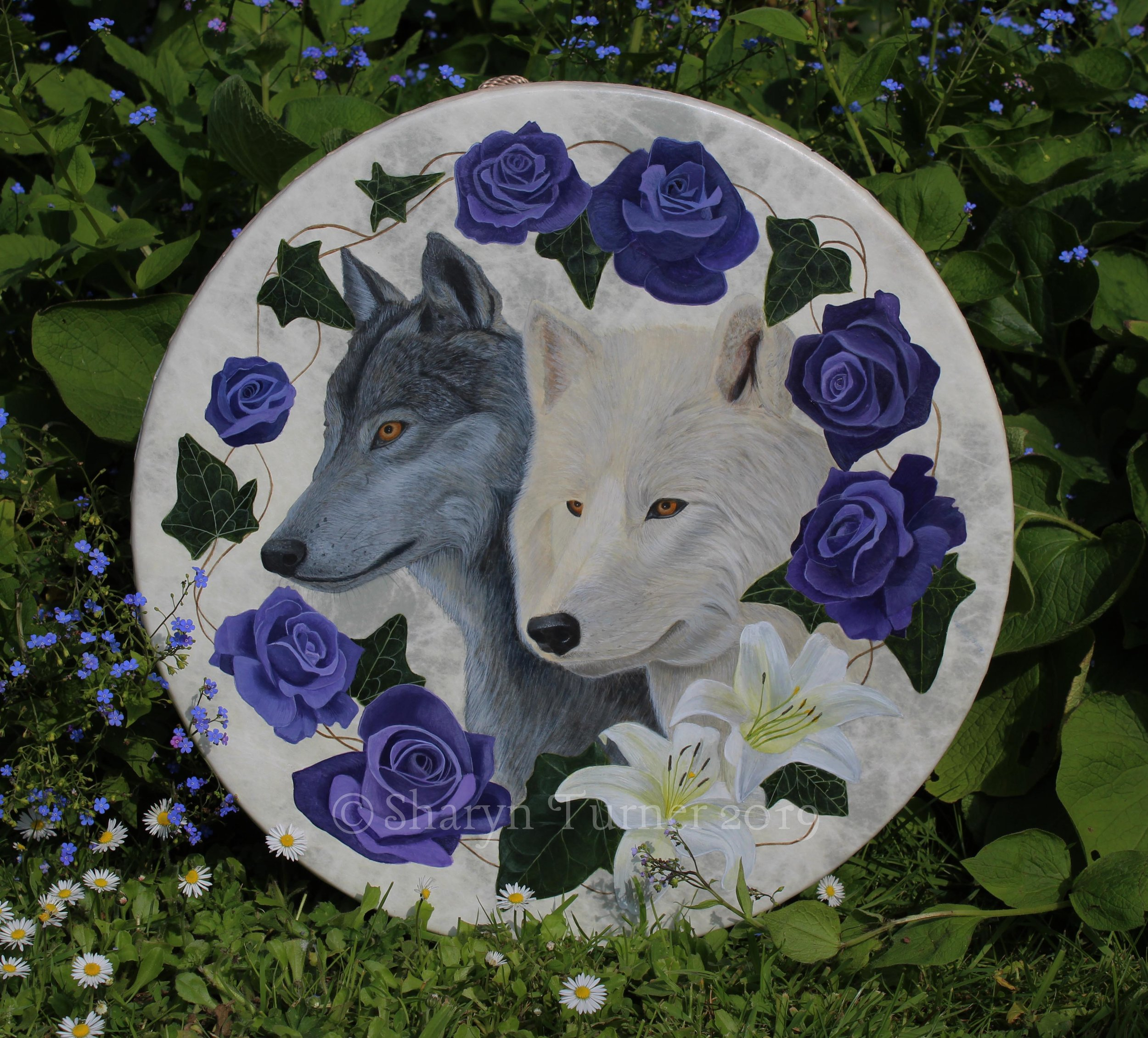 "Two Wolves 16"" Remo"
