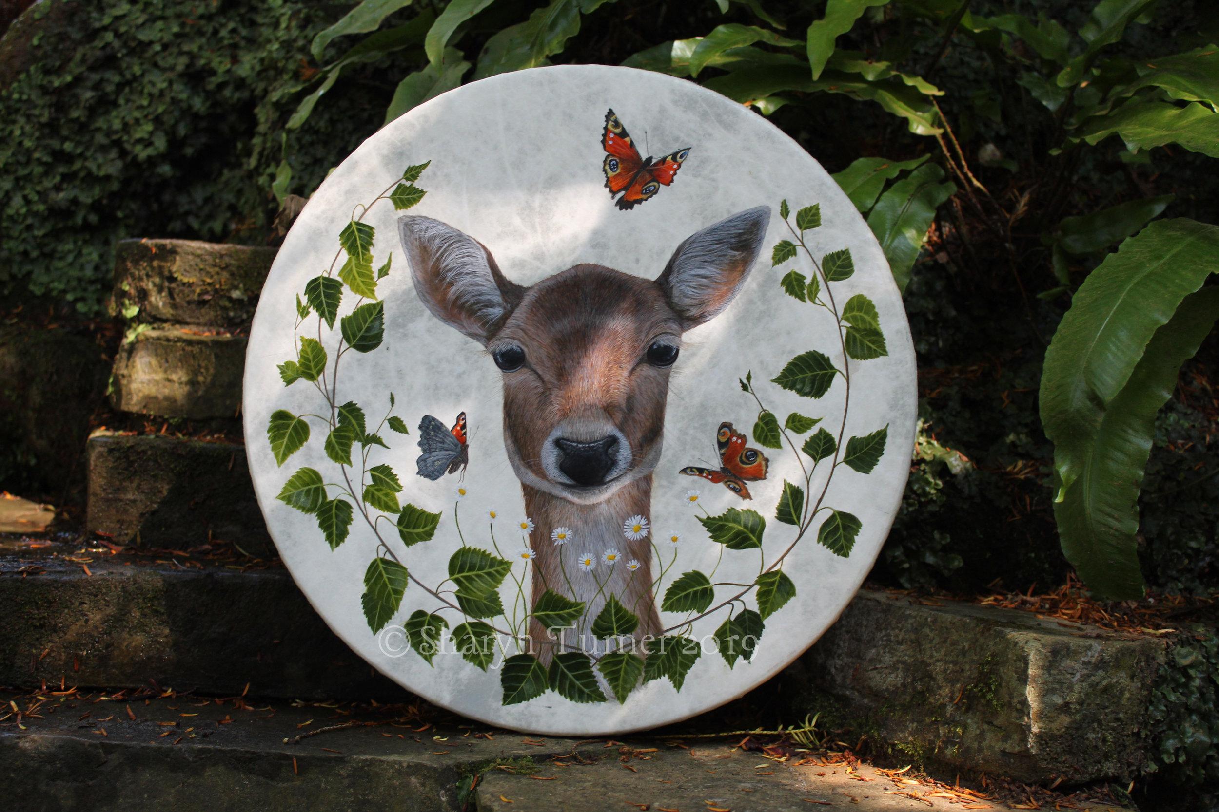 Fallow Deer Doe Drum