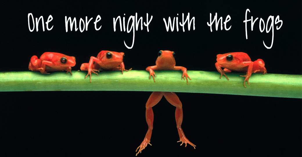 frogs-D-frogs-2925896-1600-1200
