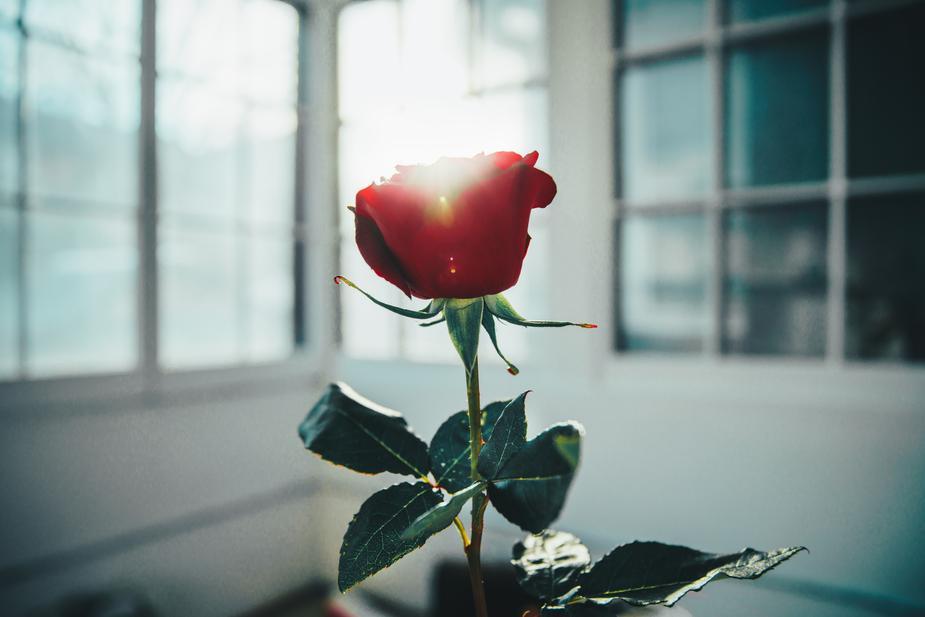 Valentines Day - Write here...