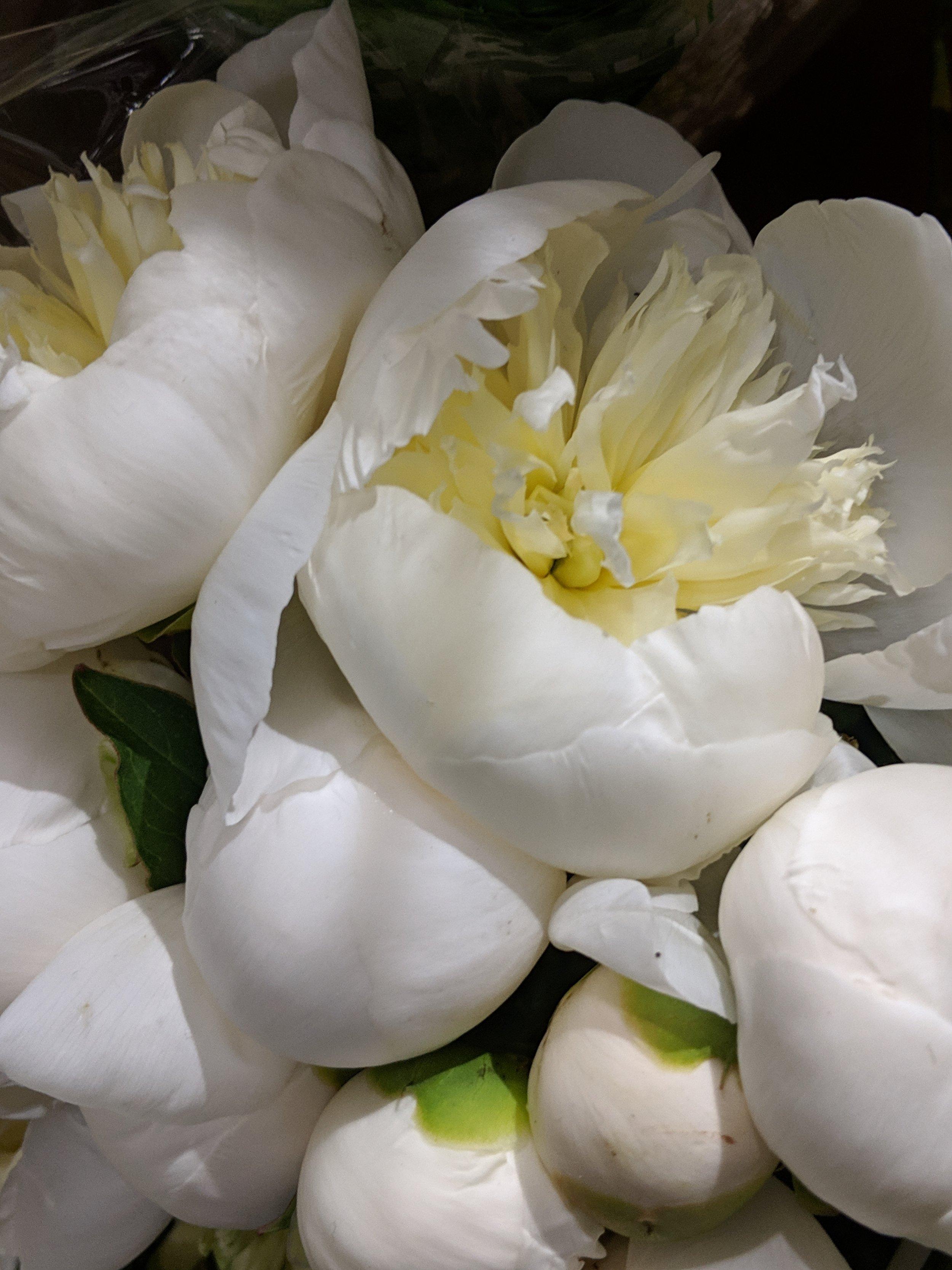 white-peonie