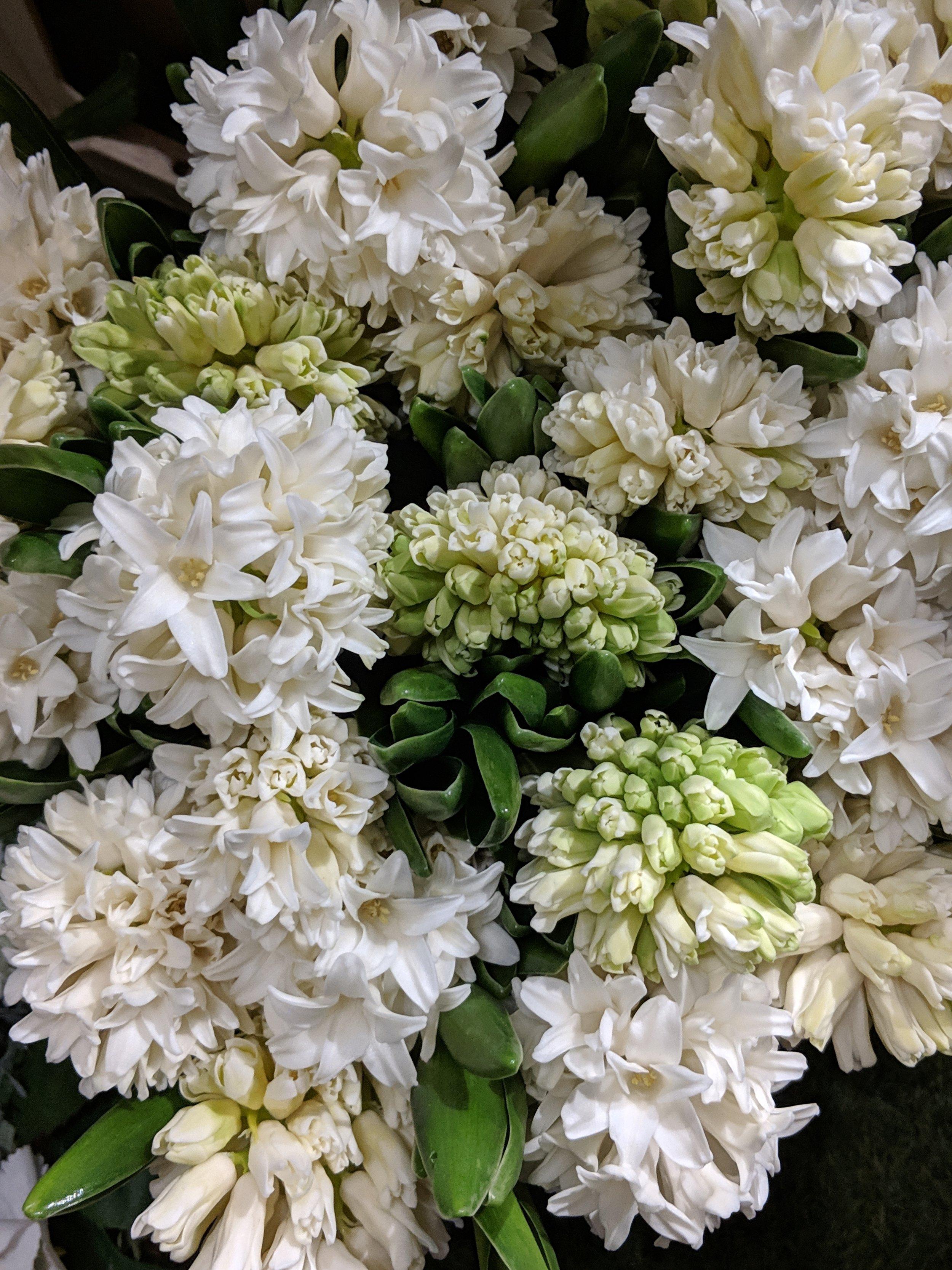 white-hyacinth