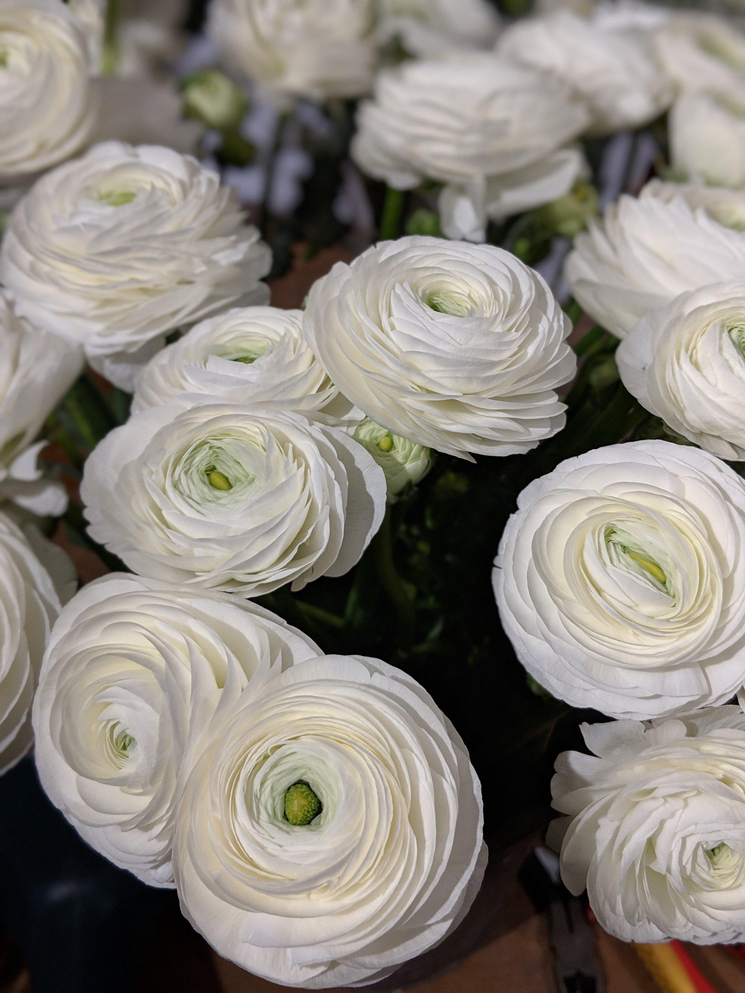 white-ranunculars