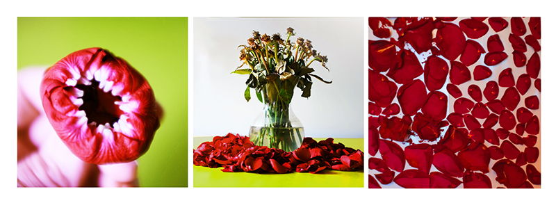 """Fun with Flowers, 2017, 8""""x8"""" each, digital photography series"""
