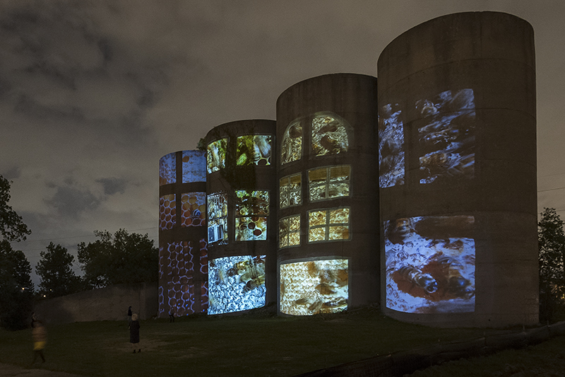 """Allison Hunter, installation view, """"Inter/Action,"""" 4-channel public facing video installation with sound, Houston, TX."""
