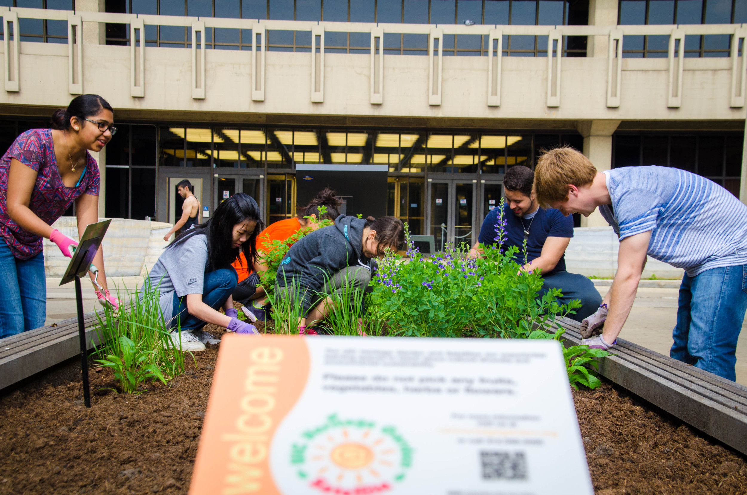 Students planting the garden. Links to Syllabi.