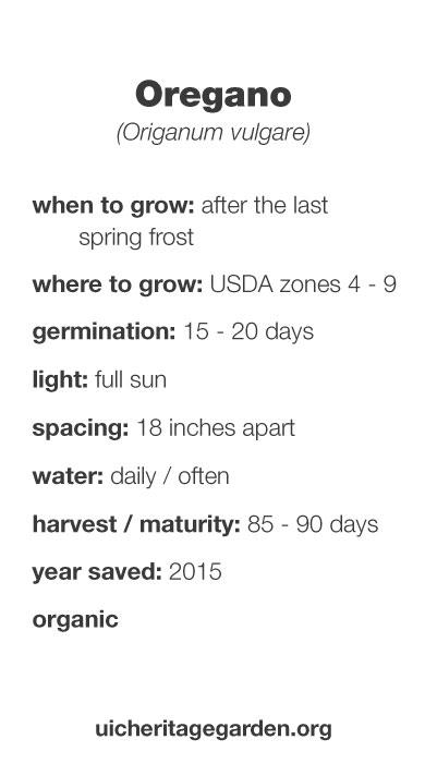 Oregano growing information