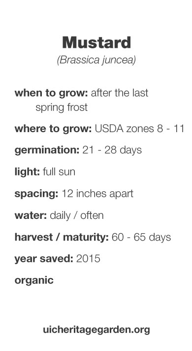 Mustard growing information