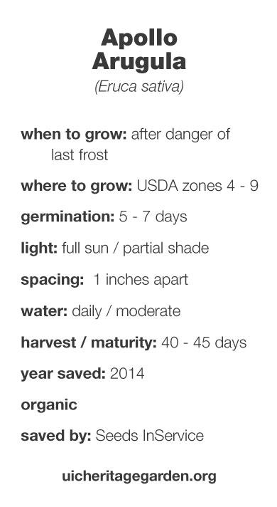 Apollo Arugula growing information
