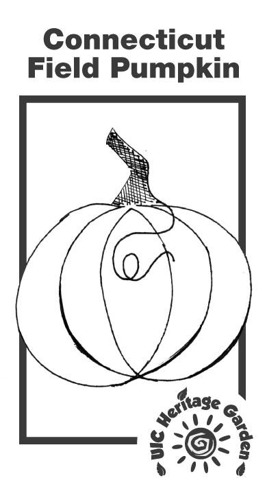 Connecticut Field Pumpkin Illustration