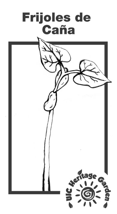 Frijoles de Caña Illustration