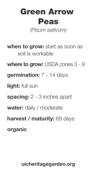 Green Arrow Peas growing information