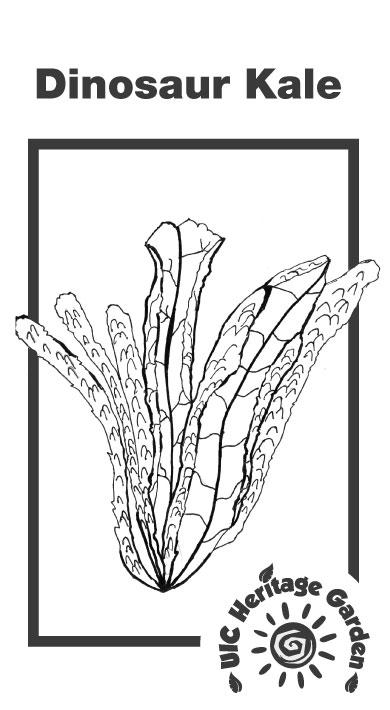 Dinosaur Kale Illustration