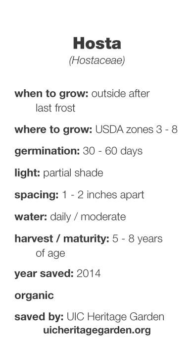 Hosta growing information