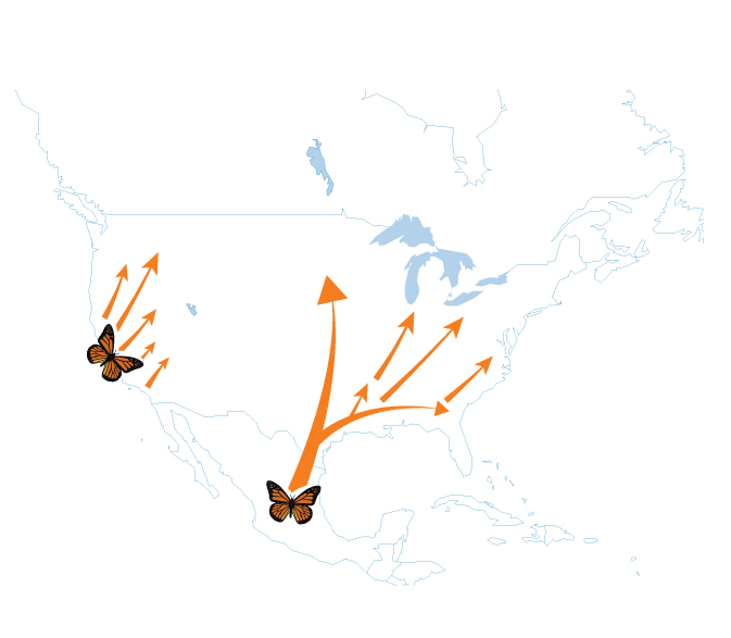 Spring/Summer Monarch Migration Route