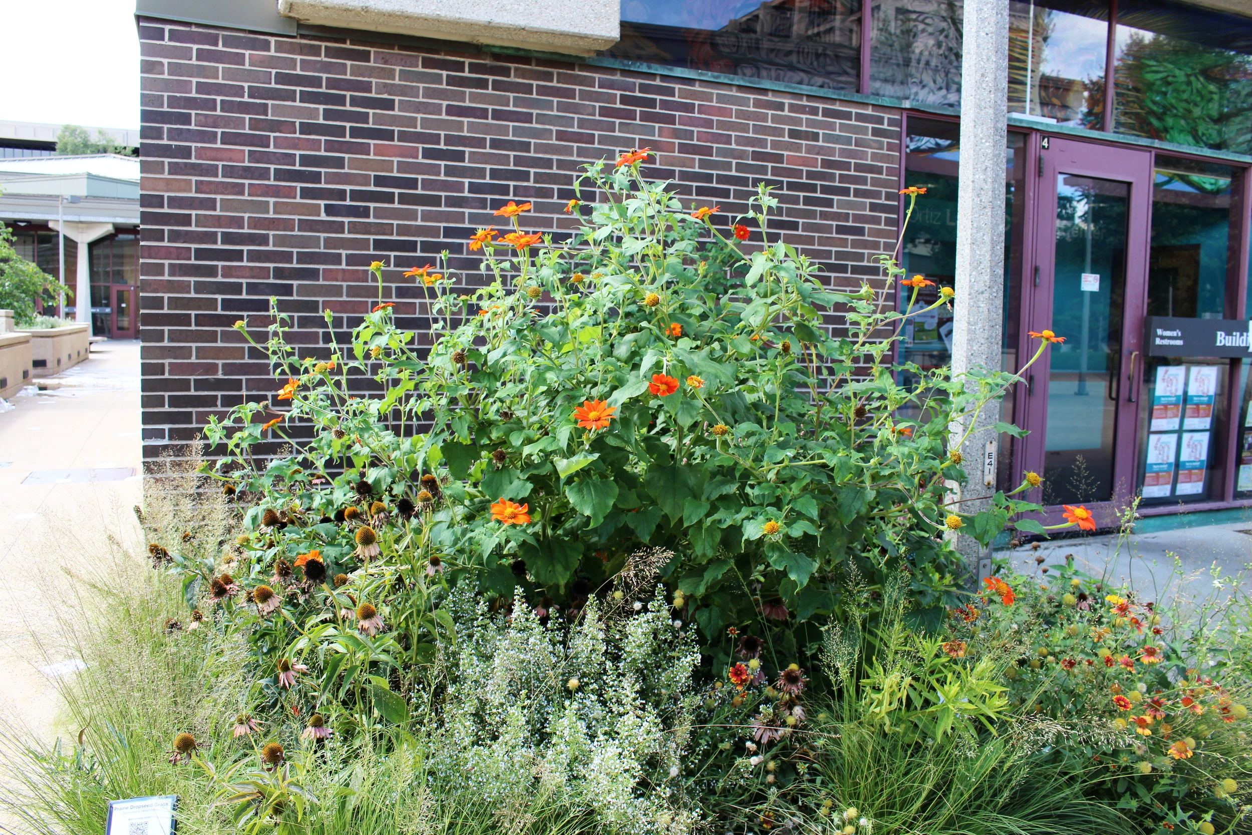 Picture of pollinator plants in garden