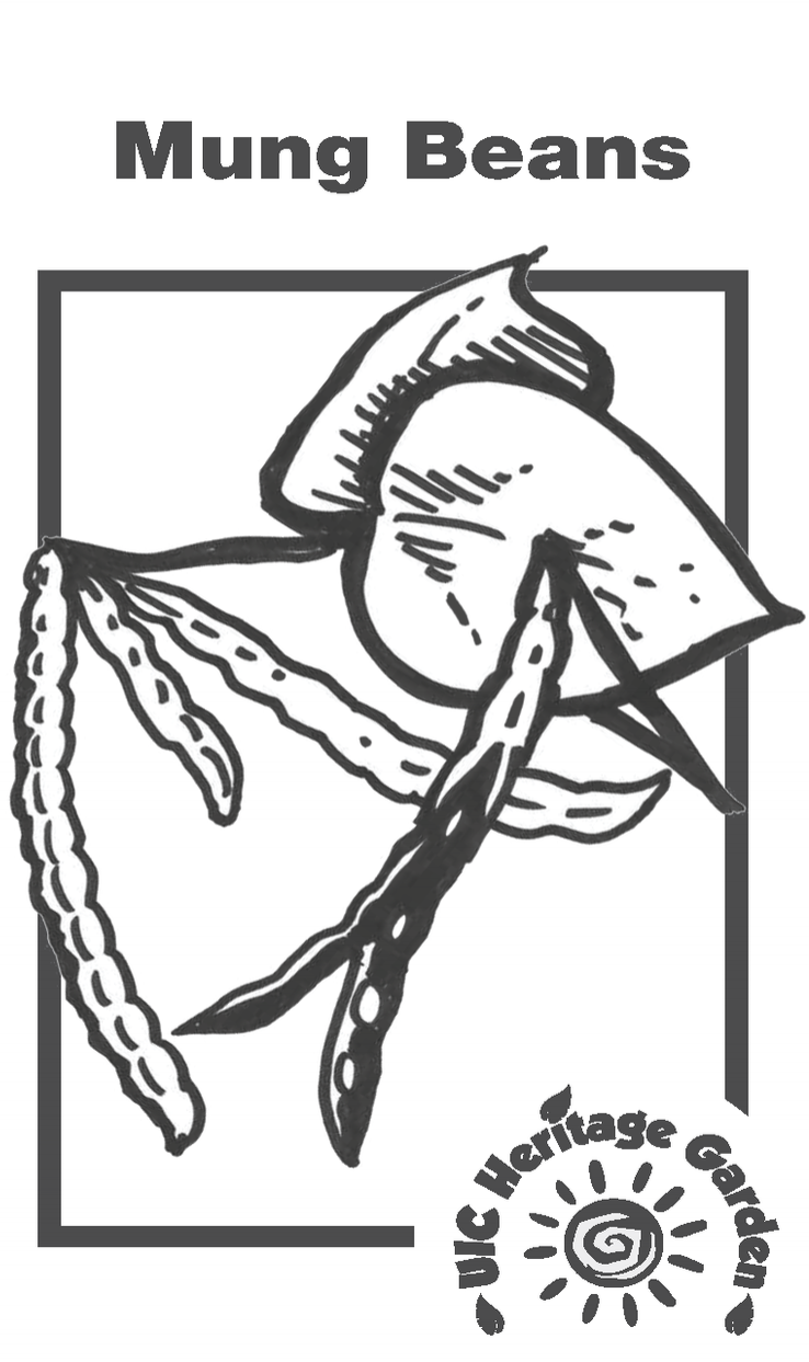 Mung Beans Illustration