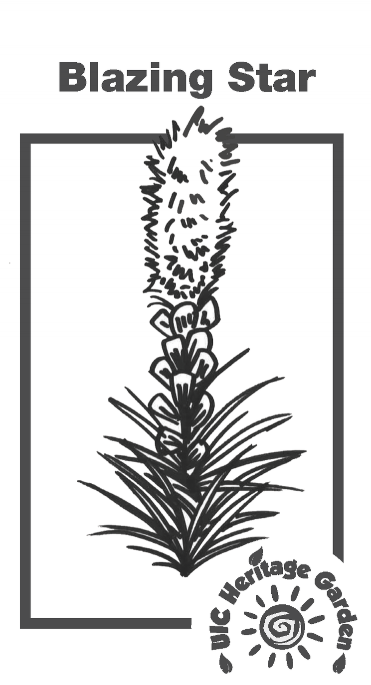 Blazing Start Illustration