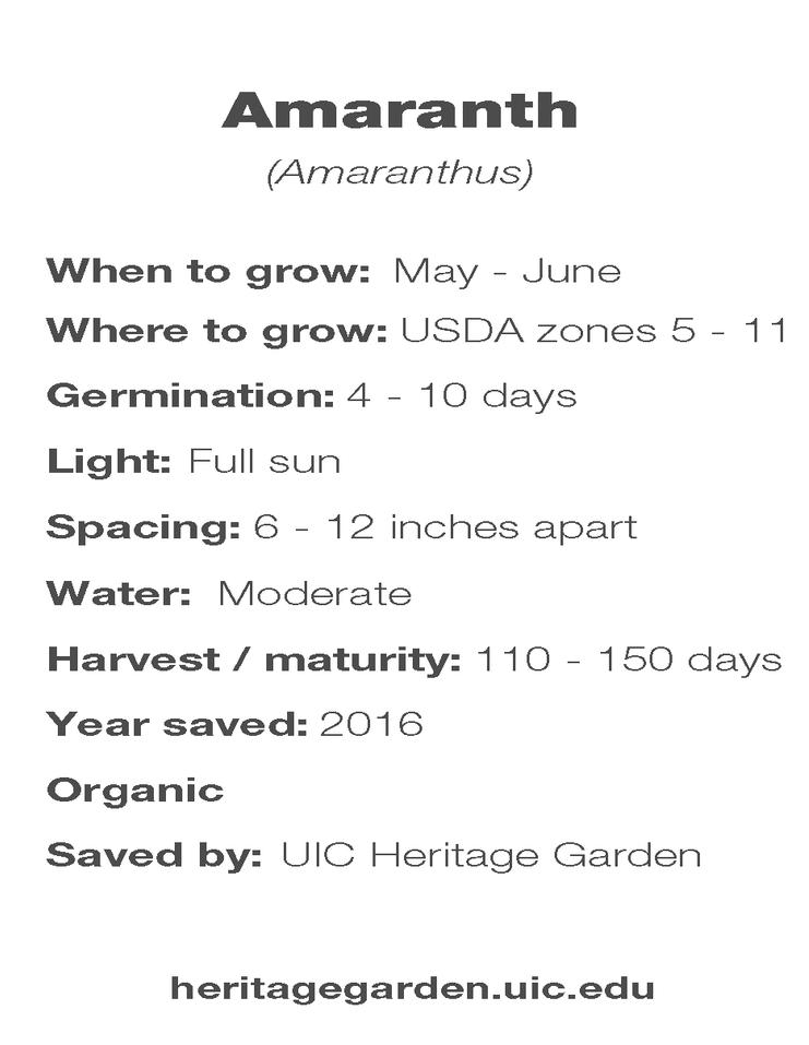 Amaranth growing information