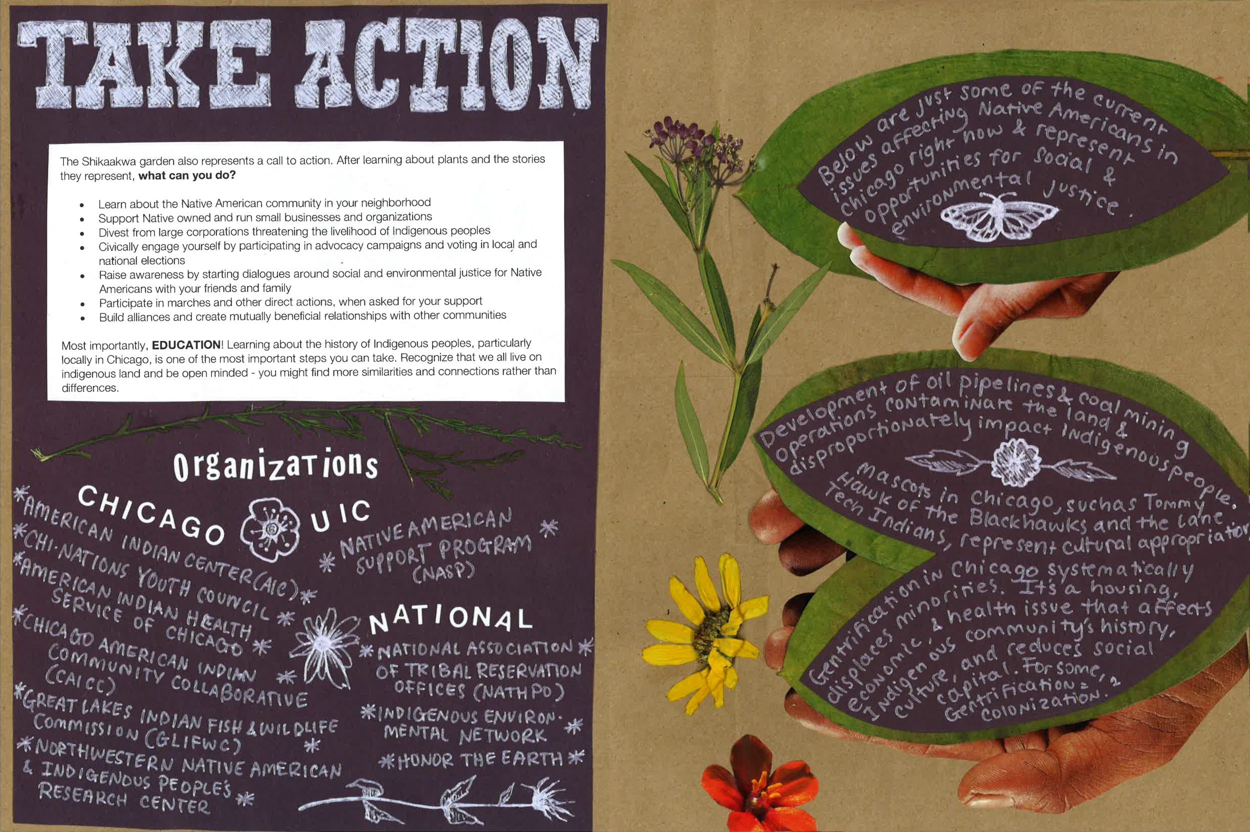 TAKE ACTION!   The Shikaakwa garden also represents a call to action. After learning about plants and the stories they represent,   what can you do?    -Learn about the Native American community in your neighborhood  -Support Native owned and run small businesses and organizations  -Divest from large corporations threatening the livelihood of Indigenous people  -Civically engage yourself by participating in advocacy campaigns and voting in local and national elections  -Raise awareness by engaging your friends and family and start dialogues around social and environmental justice for Native Americans  -Participate in marches and other direct actions, when asked for your support  -Build alliances and create mutually beneficial relationships with other communities  Most importantly,   EDUCATION !  Learning about the history of Indigenous people, particularly locally in Chicago, is one of the most important steps you can take. Recognizing that we all live on indigenous land and be open minded - you might find more similarities and connections rather than differences.   Organizations    UIC    UIC Native American Support Program (NASP)    Chicago    American Indian Center    Chi-Nations Youth Council    American Indian Health Service of Chicago    Chicago American Indian Community Collaborative (CAICC)    Great Lakes Indian Fish and Wildlife Commission (GLIFWC)    Northwestern Native American and Indigenous People's Research Center    National    National Association of Tribal Preservation Offices (NATHPO)    Indigenous Environmental Network    Honor the Earth   Below are just some of the current issues affecting Native Americans in Chicago right now and represent opportunities for social and environmental justice.  Development of oil pipeline and coal mining operations contaminate the land and disproportionately impact indigenous people.  Mascots in Chicago, such as Tommy Hawk of the Blackhawks and the Lane Tech Indians, represent cultural appropriation .  Gentrification in Chicago systematically displaces minorities. It's a housing, economic, and health issue that affects Indigenous community's history, culture, and reduces social capital. For some, gentrification = Colonization (1).