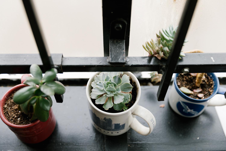 plants-bakery-driftless-magazine-midwest