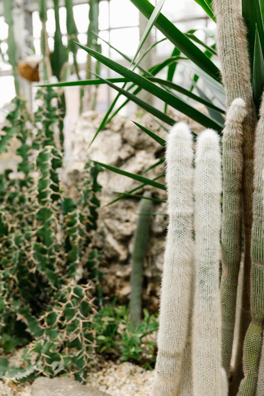 midwest-magazine-driftless-michigan-cactus