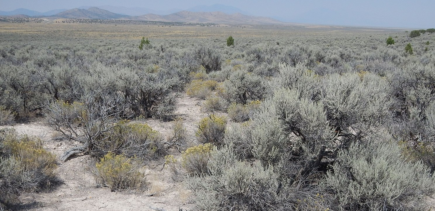 1600px-Wyoming_big_sagebrush_steppe-_NW_of_Mammoth_UT_%2820630747349%29.jpg