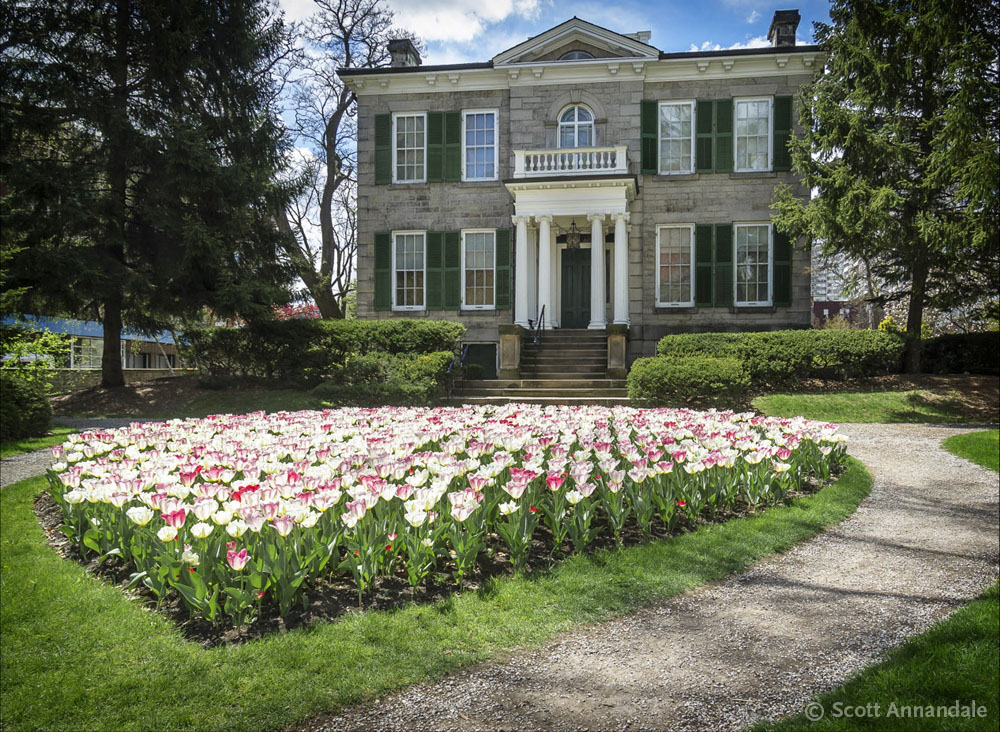 Tulips at Whitehern sm©.jpg