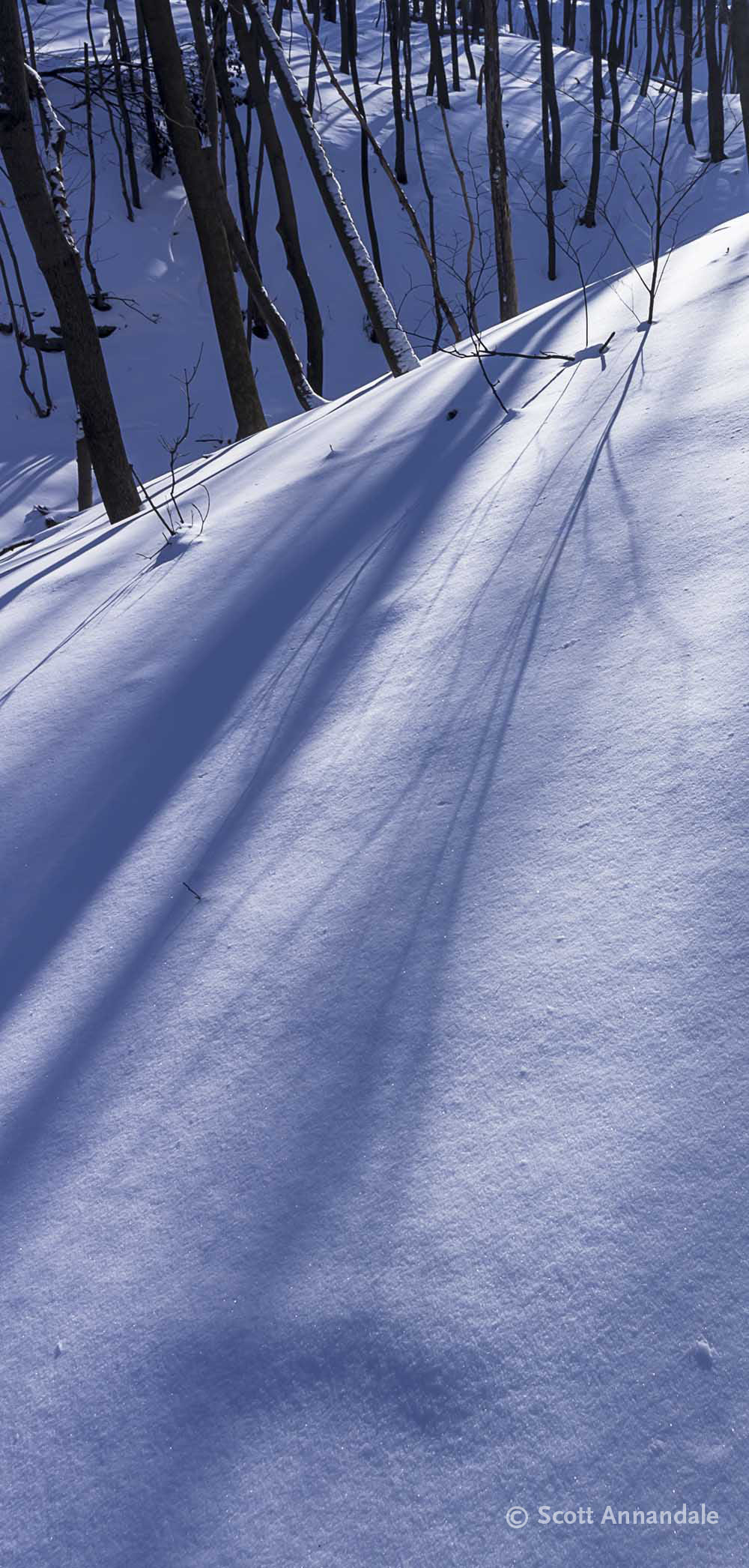 Snow Shadows, Hamilton