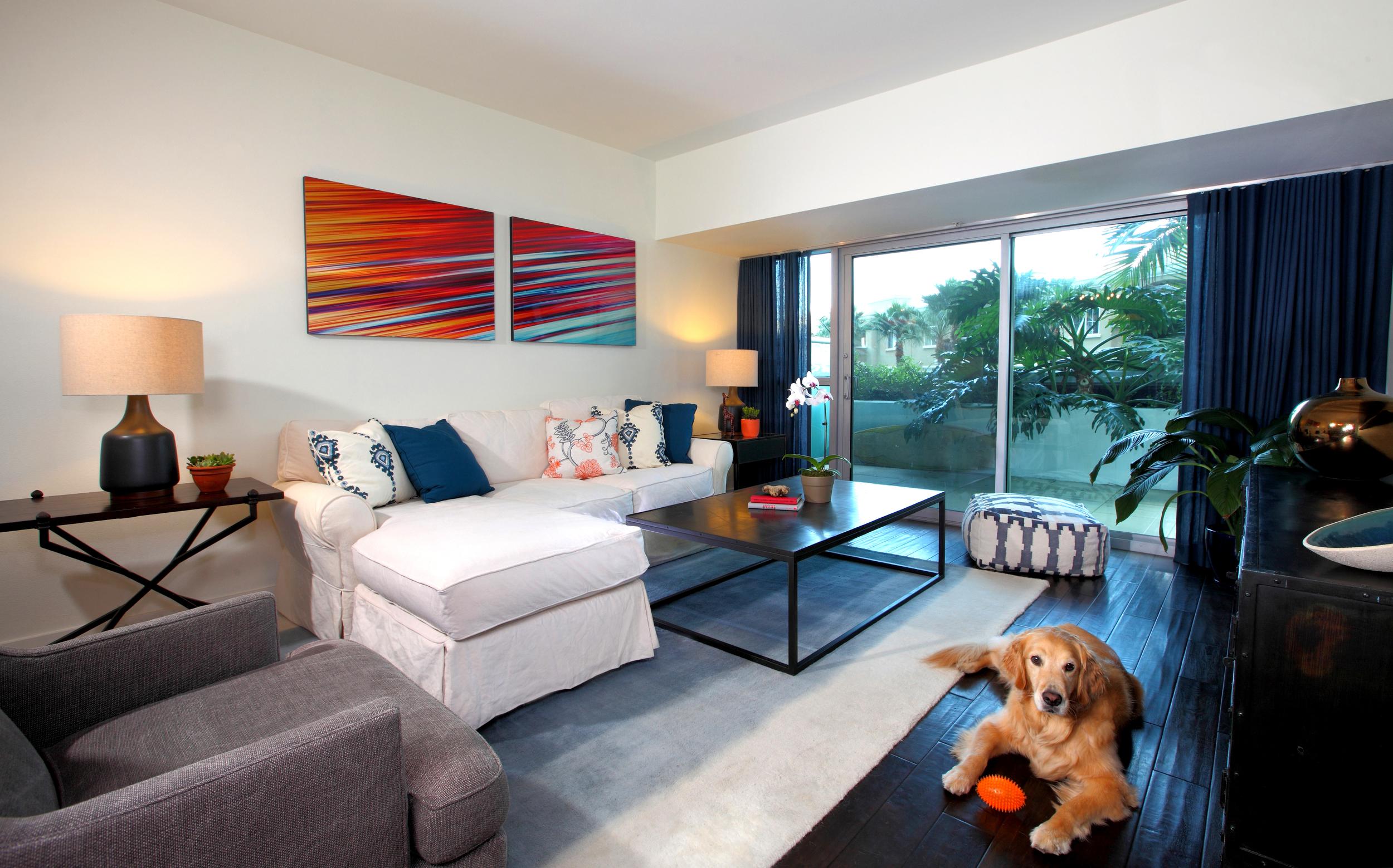 dog.livingroom.design.modern