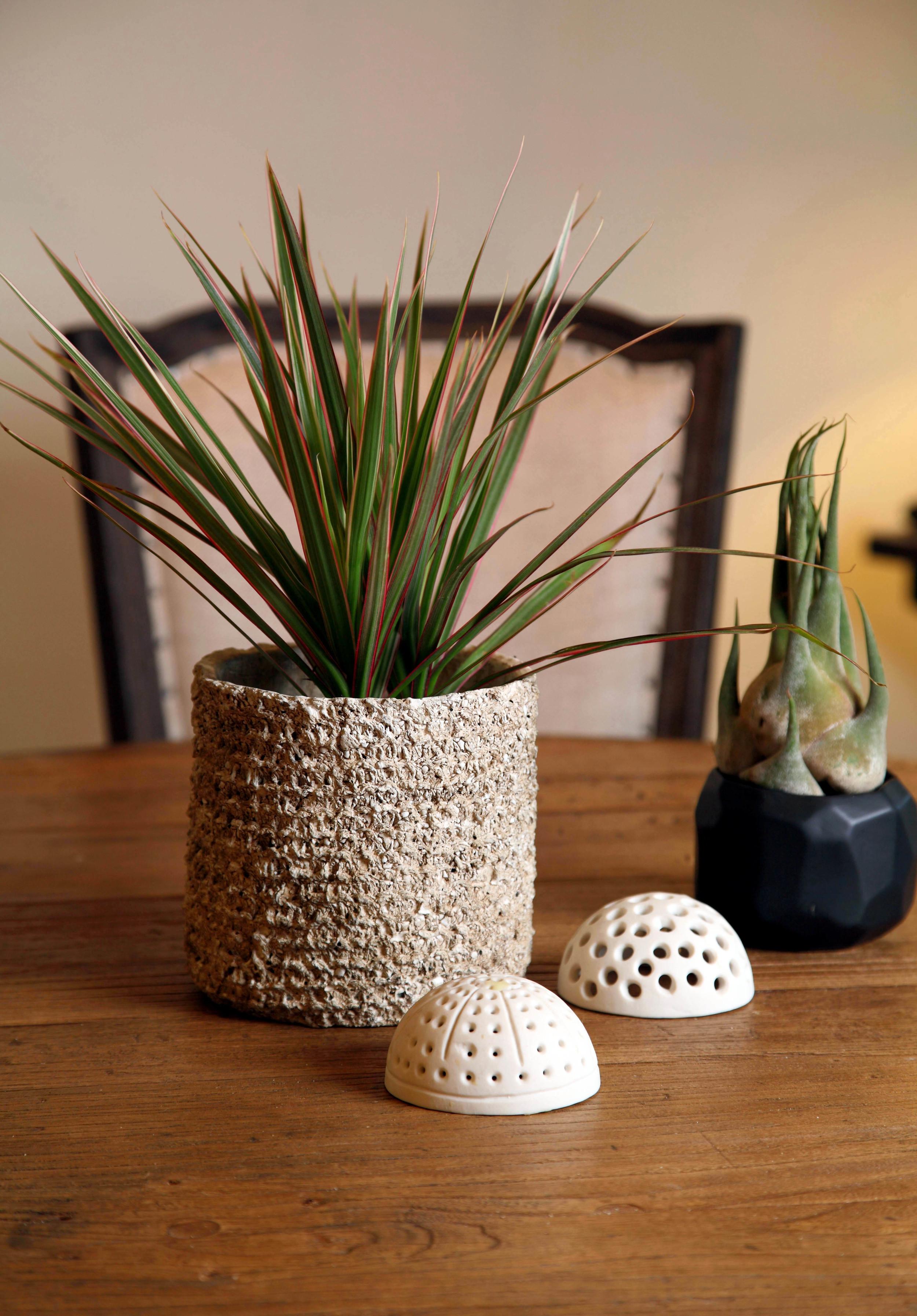 plant based.design