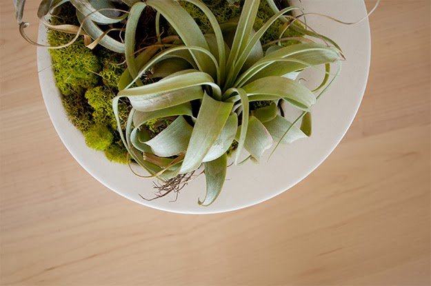 airplant.green.modern.decor