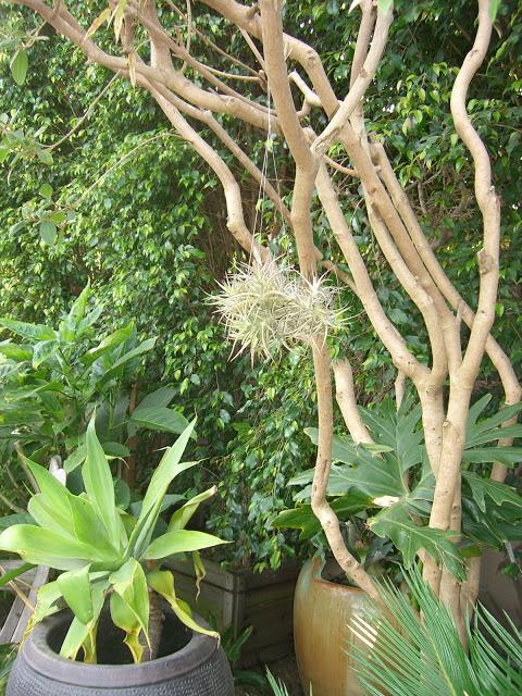 airplant.garden.green