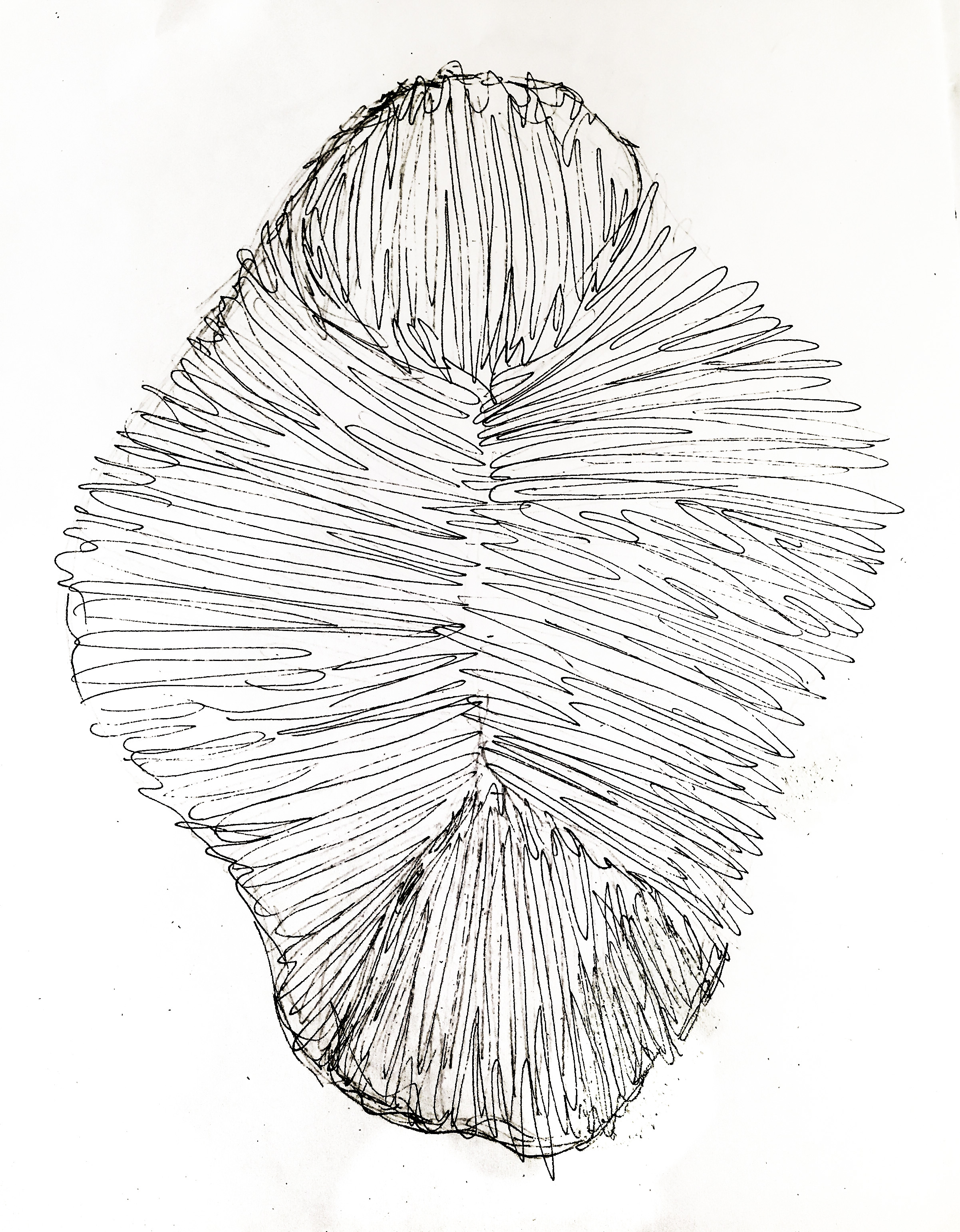 sarah-barnard-design-wall-sconce-prototype-sketch-1.jpg