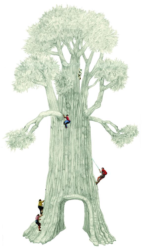 Drive-through-tree